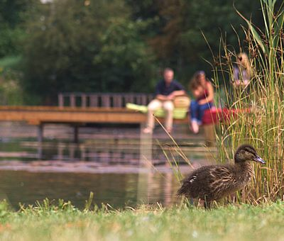 Personen sitzen auf einem Steg im Kurpark von Bad Laer